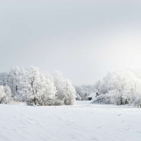 Trees on the snow-covered forest hill. Remote village. Cloudy blue sky. Winter wonderland. Seasons, nature, environment, ecology, climate change. Copy space, graphic resources Фото со стока