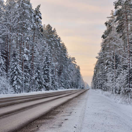Empty highway through the hills of snow-covered pine forest. Winter rural scene. Travel, Christmas vacations, logistics, dangerous driving, off-road, transportation, winter tires, speed, freedom