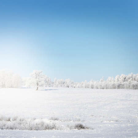 Trees on the snow-covered forest hill at sunset. Clear blue sky. Winter wonderland. Seasons, nature, environment, ecology, climate change. Copy space, graphic resources