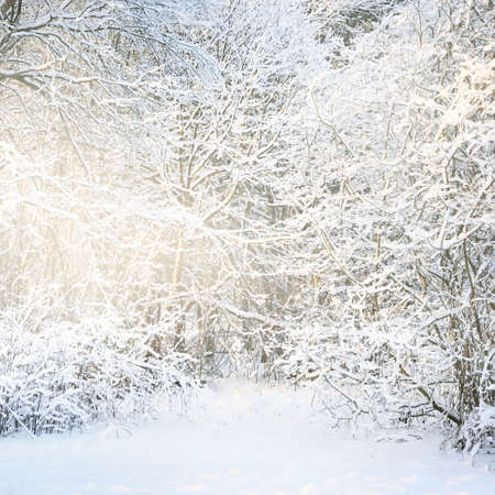 Atmospheric landscape of snow-covered forest at sunset. Pure sunlight. Hoarfrost on branches. Winter wonderland. Seasons, ecology, global warming, ecotourism, christmas vacations, graphic resources