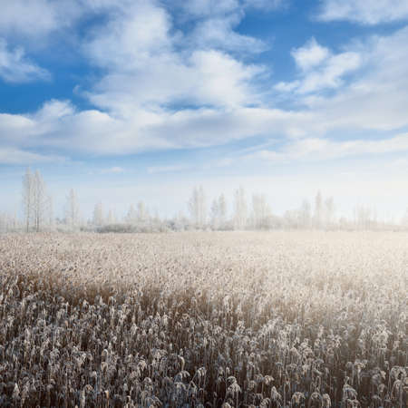 Panoramic view of snow-covered forest meadow (field) on a clear day. Trees in a hoarfrost. Dramatic clouds. Winter wonderland. Idyllic landscape. Seasons, ecology, environment, ecotourism. Russia