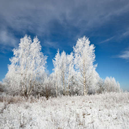 Panoramic view of snow-covered forest hills on a clear day. Birch trees in a hoarfrost. Winter wonderland. Idyllic landscape. Seasons, ecology, global warming, ecotourism, christmas vacations. Russia Фото со стока