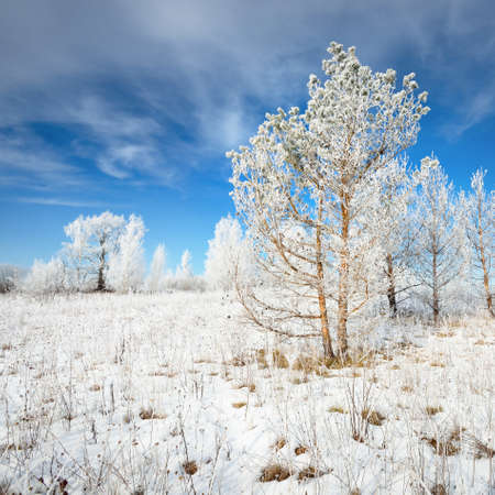 Panoramic view of snow-covered forest hills on a clear day. Pine and birch trees in a hoarfrost. Winter wonderland. Idyllic landscape. Seasons, ecology, global warming, ecotourism, christmas. Russia Фото со стока