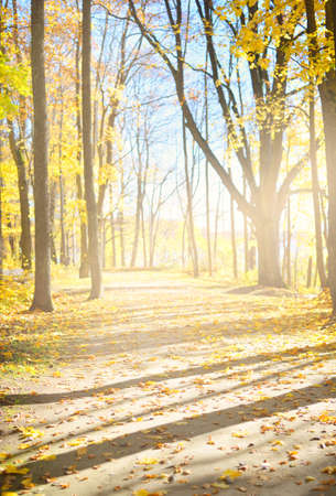 Pathway (alley) through the golden deciduous trees, wooden bench. Forest floor of colorful red, orange, yellow, leaves. Autumn in Europe. Idyllic rural scene. Nature, environment, recreation, walking