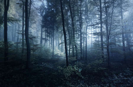 Pathway (tunnel) in a majestic beech forest at sunset. Mighty trees. Mysterious blue light, fog. Moon, twilight, night. Dark picturesque scenery. Wanderlust, silence, gothic, fairy tale concepts Banco de Imagens