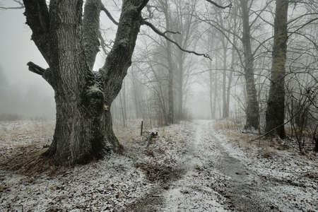 Pathway through the hills of majestic northern forest. Mighty deciduous trees, hoarfrost, first snow, blizzard, fog. Atmospheric landscape. Silence, loneliness concepts. Black and white, monochrome Standard-Bild