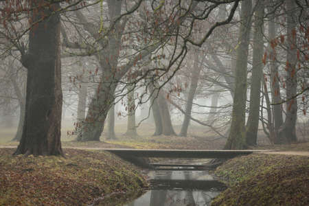 River in a forest park. Modern wooden bridge (boardwalk). Autumn colors, fog, mist, overcast day. Mighty trees, dry plants, green grass, moss, golden leaves. Early spring. Reflections on water