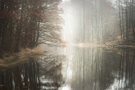 Canal (river) in a forest park. Autumn colors, fog, mist, overcast day. Mighty trees, dry plants. Early spring. Symmetry reflections in crystal clear water, natural mirror. Loneliness, silence concept