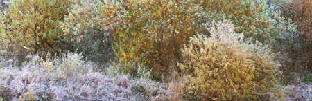 Picturesque panoramic view of an autumn forest. Green, red and golden leaves. Trees covered with hoarfrost and first snow. Early winter. Atmospheric landscape. Ecotourism, nature, environment, seasons