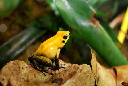 yellow frog sitting in terrarium