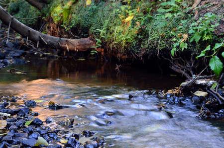 forest river scene Imagens