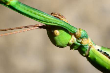 stick insect in terrarium