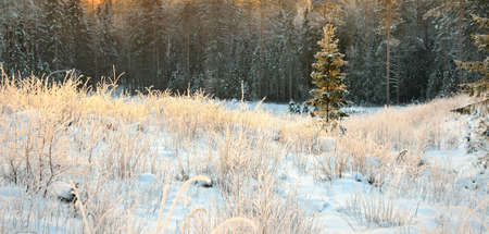 winter forest at the sunset