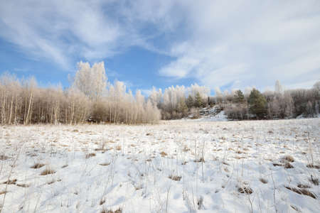 Birch tree forest covered with snow and rime. Winter view of Russian countryside. Archivio Fotografico