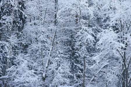 Winter wonderland in a mixed forest