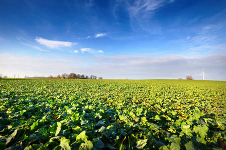 agricultural field with crops and a wind turbine in the background on a clear day Stock Photo