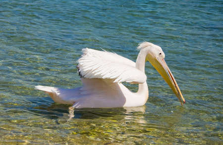 Pelican floating on the waves of the sea near the shore Stock Photo - 6938299