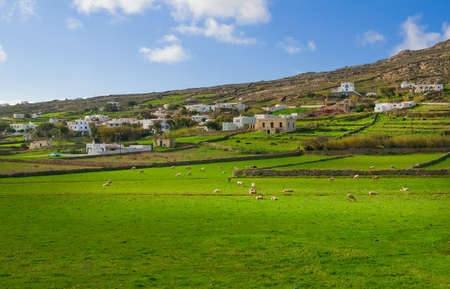 Rural landscape with pasture and grazing sheep photo