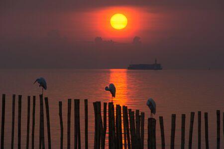 The sun and birds.
