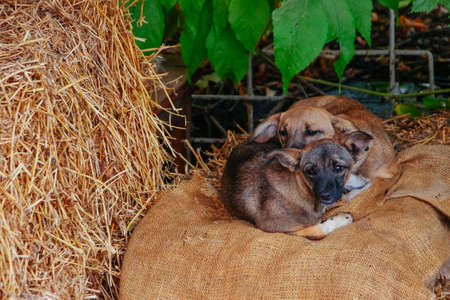 Sleeping yawn puppies dogs on hay