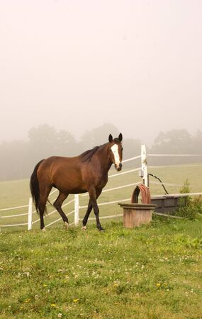 Horse coming in from pasture