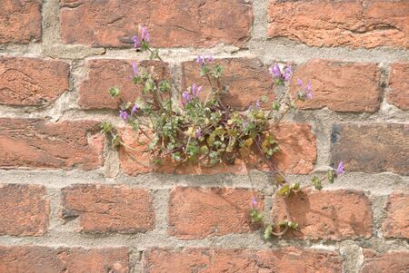 durable: Brick wall with weed growing in it