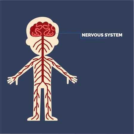신경계 일러스트