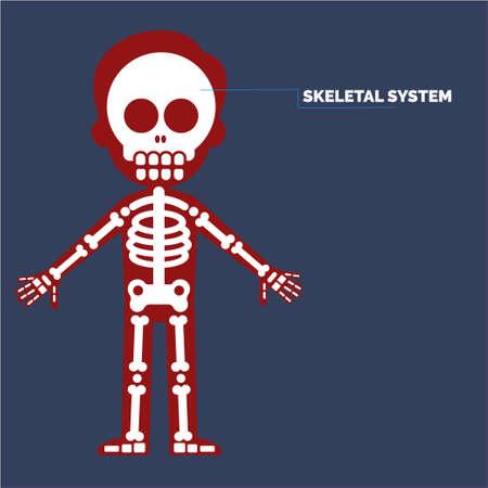 Skeletal system Иллюстрация