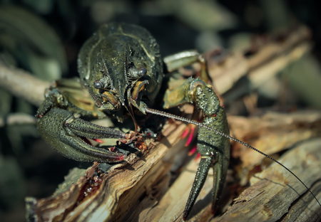 crustaceans: crustaceans Stock Photo