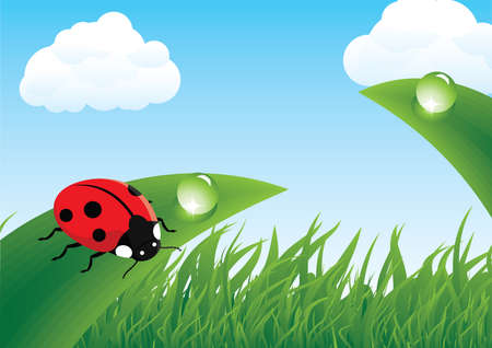 Ladybug on grass Illustration