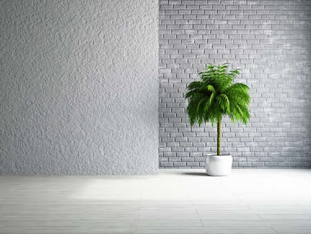 The empty room with plant near the wall Stock Photo - 19322787