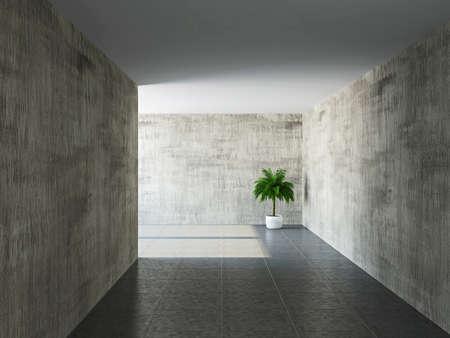 couloirs: Couloir avec de vieux murs et un palmier