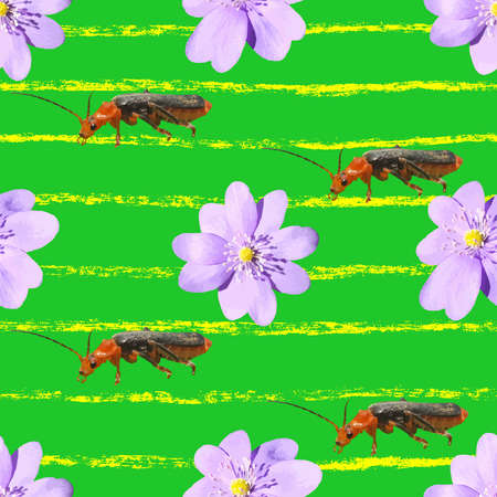 Pattern with Realistic Flowers and Soldier Beetles Seamless Design Stock Vector Illustration Illustration