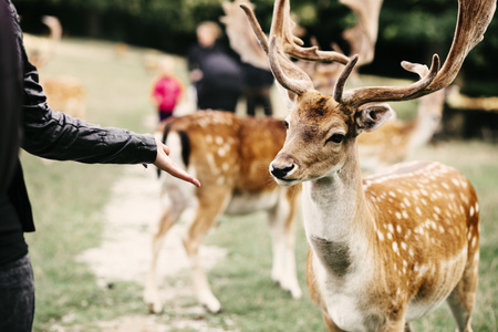 Midsection of woman holding out palm towards deer at zoo LANG_EVOIMAGES