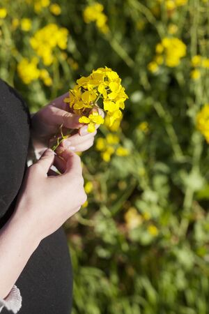 Midsection of pregnant woman holding oilseed rape flowers on field