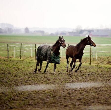 Two horses running in enclosed pasture LANG_EVOIMAGES