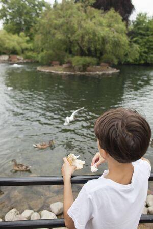 egglayer: Boy feeding ducks LANG_EVOIMAGES