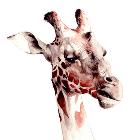 Hand painted giraffe portrait