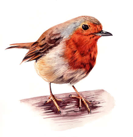 red breast: Hand painted robin red breast