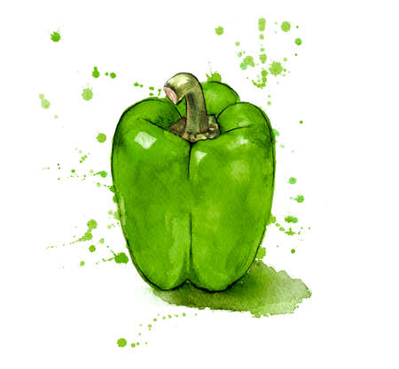 Green Pepper, hand painted with watercolours Stok Fotoğraf
