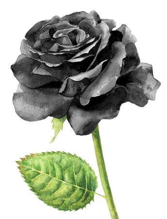 rosa negra: negro solo se levantó pintura a la acuarela Foto de archivo