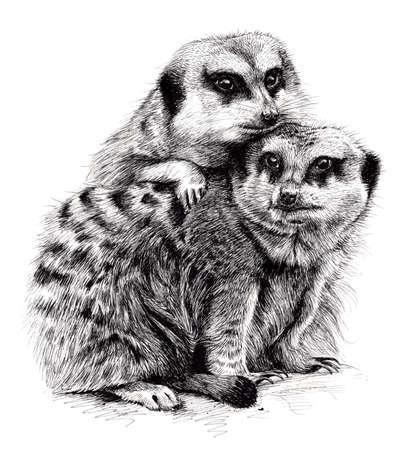 amigos abrazandose: Dibujo de la tinta de un par de suricatas líos juntos.