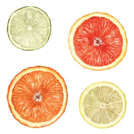 fructose: Hand painted citrus fruit slices. Stock Photo