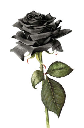 Hand painted single black rose.