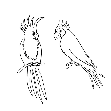 Vector illustration of parrot outline based on hand draw sketch. Organic contour. Isolated on white. Great choice for t-shirt design, infographic, web-design, stickers, banners, coloring book etc.