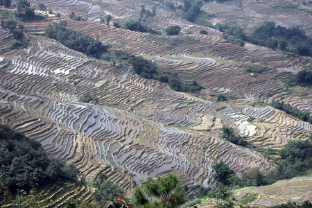 province: Yuanyang rice terraces in Yunnan Province of China