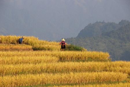Longji rice terrace ping an, Guangxi, China Editorial