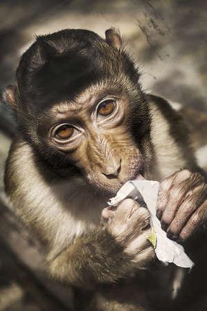 Monkey Eat Ice Creme Stock Photo