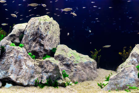 aquascaping: A beautiful professional aquarium with large rocks and many fish