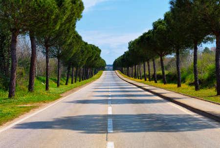 empedrado: Un camino pavimentado largo que conduce a distancia a lo desconocido